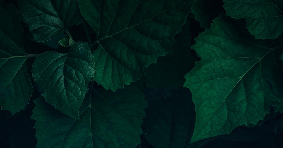 FullFrame-Photomkt-Portafolio-Corporativo-Patrimonia