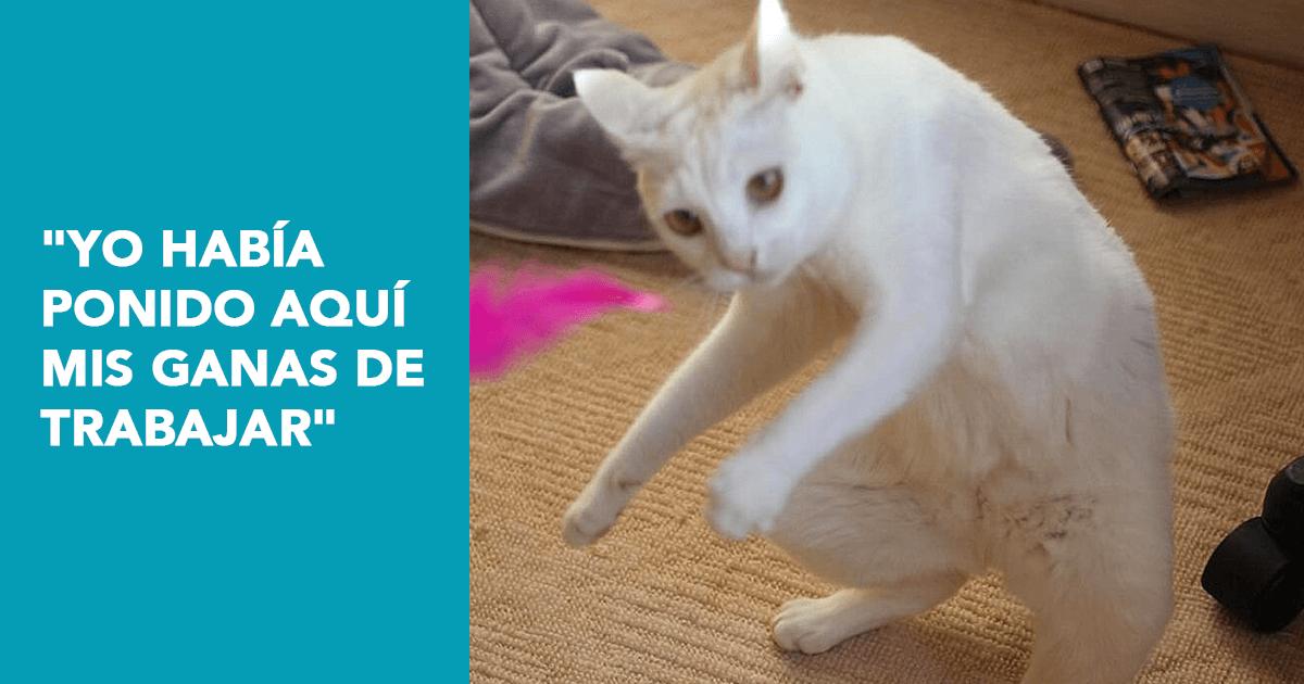 Blog-FullFrame-Photomkt-Mejores-Memes-2019-Marketing (1)