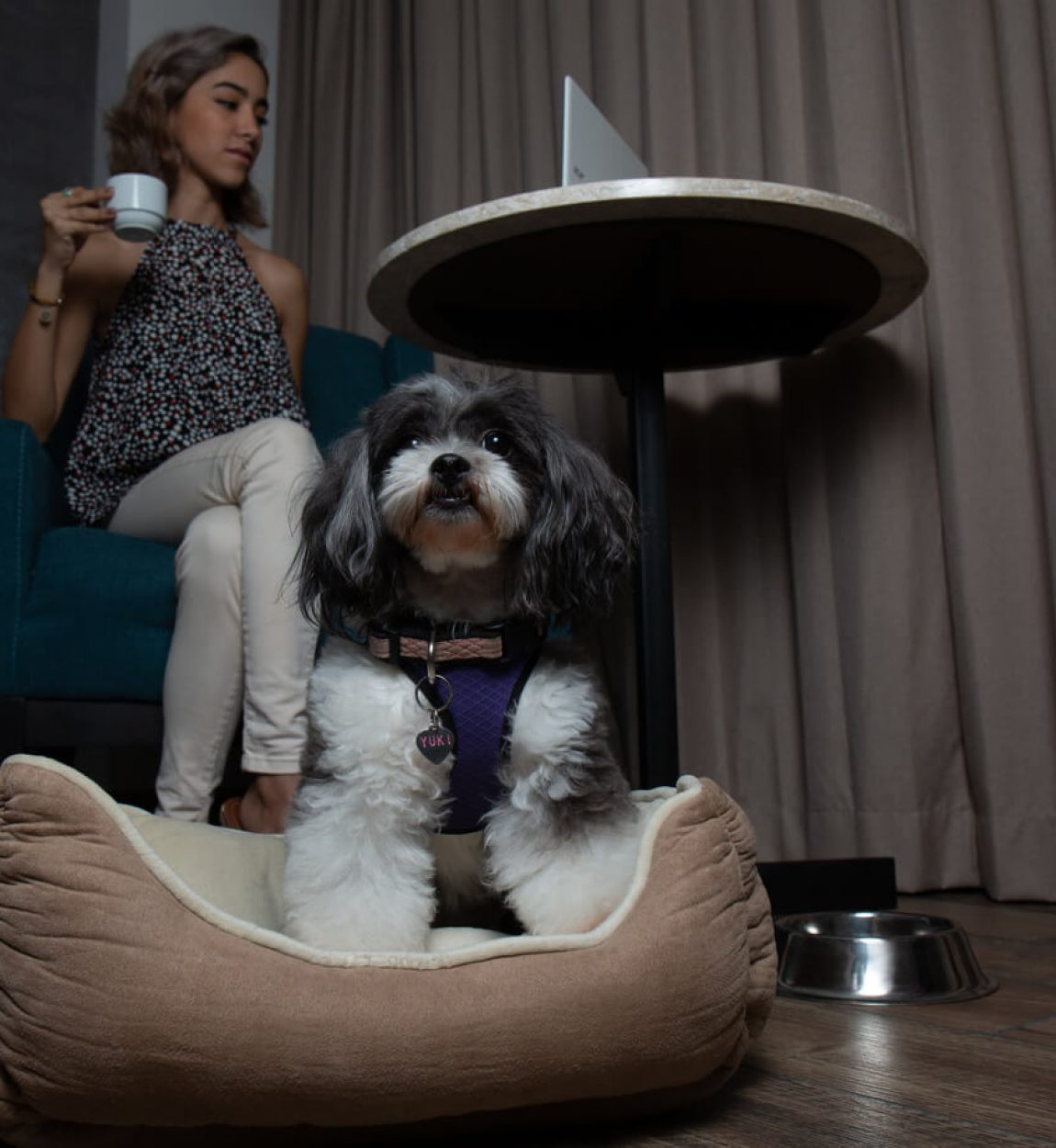 Hyatt-Regency-Mérida-Pet-Friendly-5